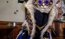 Exclusive Q&A: Fawkes, Pike and Ruby the cosplay pets!